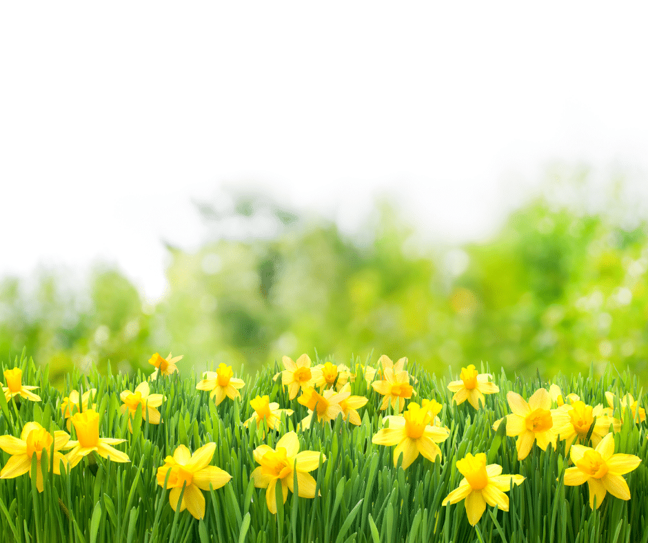 Yellow flowers in the grass